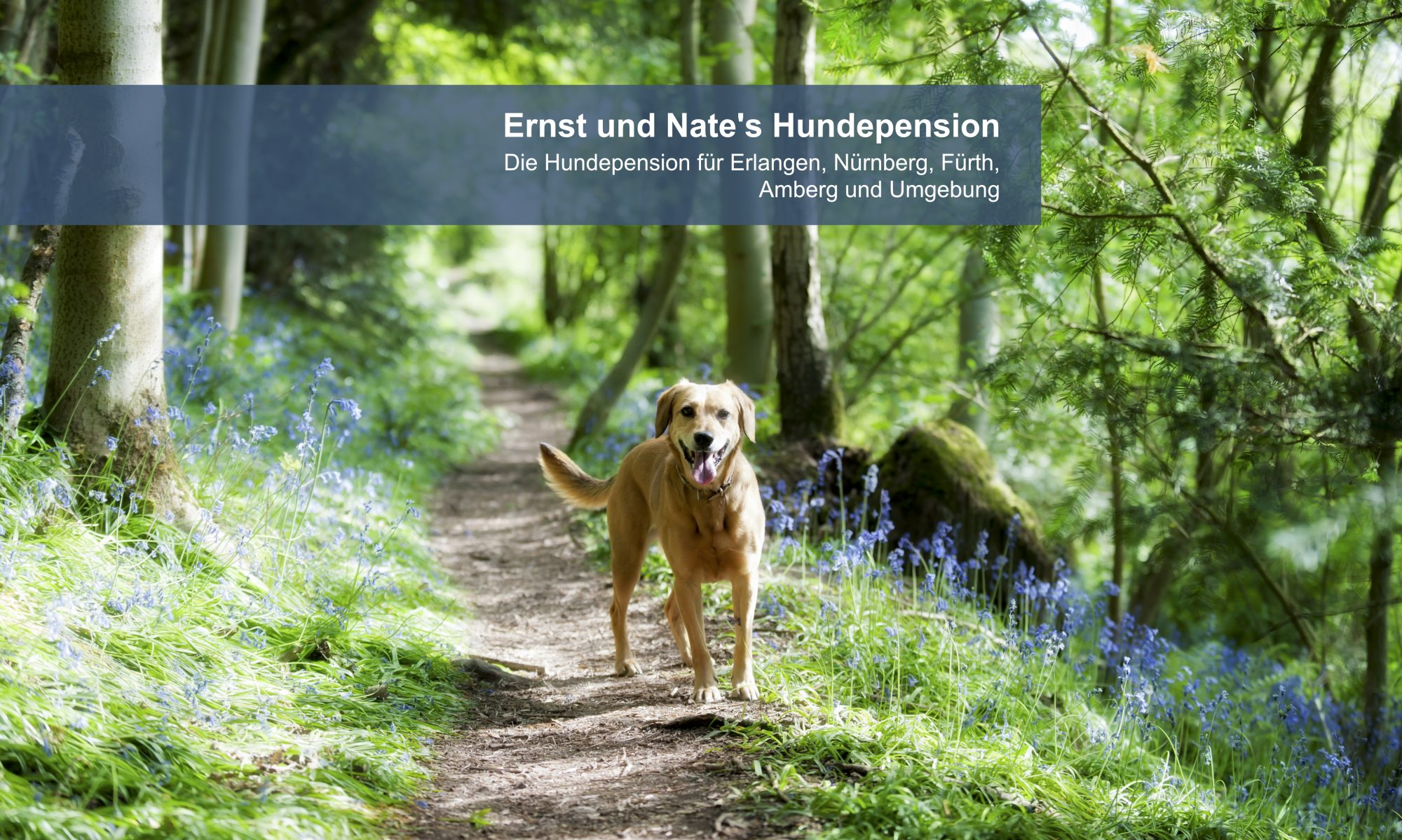 Ernst und Nate´s Hundepension